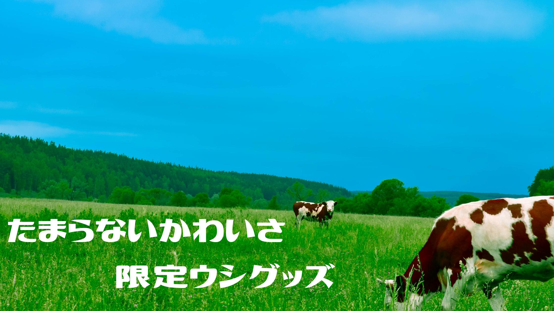 【めざましテレビ】『干支モンチッチ』『牛モチーフジュエリー』『牛乳石鹸みくじ』かわいい限定ウシグッズ