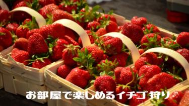 【めざましテレビ】お部屋で楽しめるイチゴ狩り『オンラインイチゴ狩り』『イチゴでいっぱいのイチゴルーム』